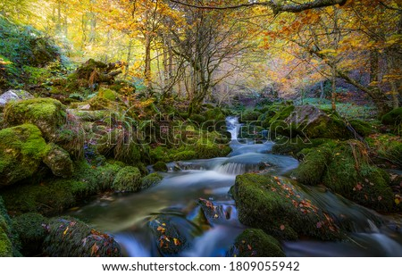 Photo of  Autumn forest creek mossy rocks. Forest creek in autumn season. Autumn forest creek view. Forest creek in autumn