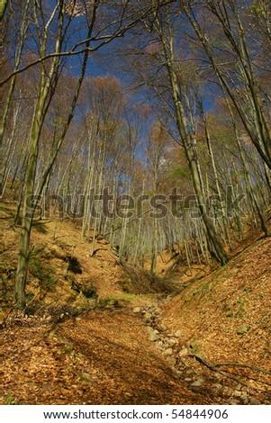 Autumn forest detail.