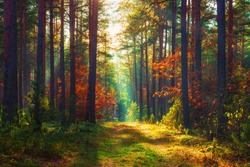 Autumn forest. Fall nature. Colorful trees in woodland