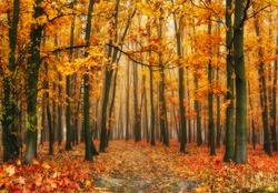 autumn forest. foggy morning. A picturesque fog in the autumn forest