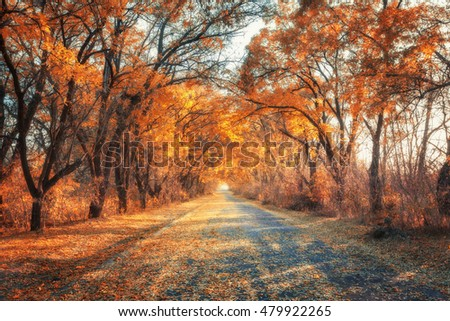 Autumn forest. Forest with country road at sunset. Colorful landscape with trees, rural road, orange leaves and blue sky. Travel. Autumn background. Magic forest