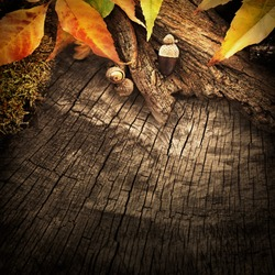 Autumn forest fruit background. Acorns on tree bark and autumn colorful leaves with copyspace