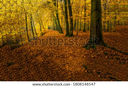 Autumn forest ground with falling leaves. Fall in autumn forest. Autumn forest scene. Autumn in forest
