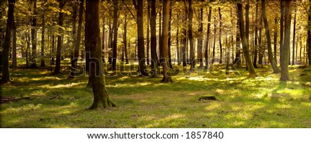 Autumn forest (huge file) - stock photo