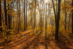 Autumn forest in a foggy morning at sunrise