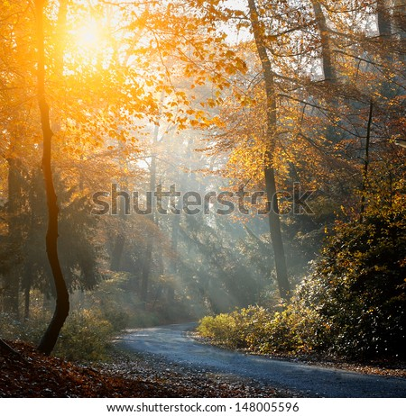 Autumn forest in sunrise - stock photo