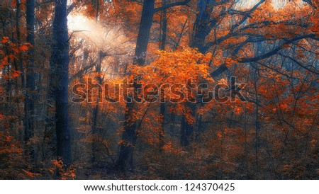Autumn forest in sunset