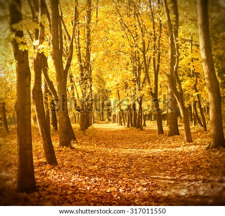 Autumn forest in sunset light. Beautiful nature background.