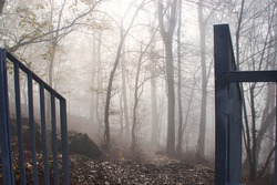 autumn forest in the fog with metal railing