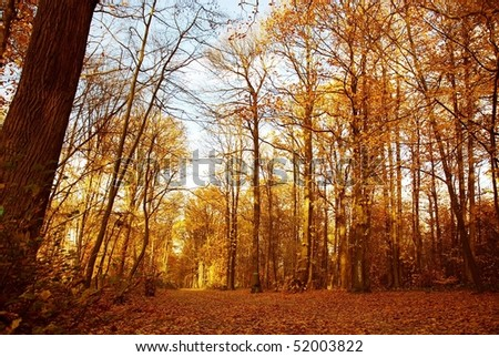 Autumn forest in the park
