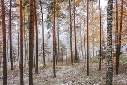 Autumn forest in the snow. Visible in yellow, red, and green leaves on trees. Scandinavian nature. Finland.