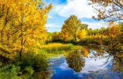 Autumn forest lake water view. Forest lake water in autumn. Autumn forest lake. Autumn forest lake view