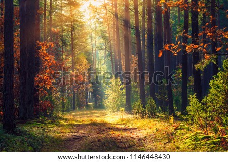 Autumn forest landscape. Colorful foliage on trees and grass shining on sunbeams. Amazing woodland. Scenery fall. Beautiful sunrays in morning forest.