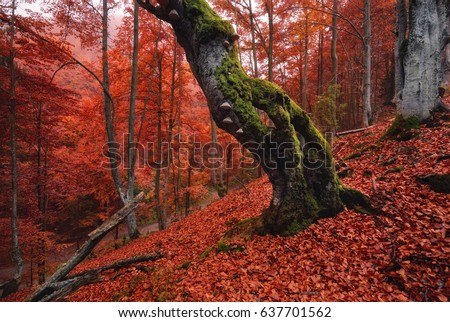 autumn forest landscape in red...
