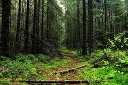 autumn forest landscape Indian Summer