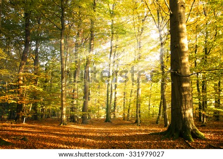 Autumn forest landscape with sun rays and colorful autumn leaves at the tall trees, beauty in nature for posters, background or wallpaper - Shutterstock ID 331979027