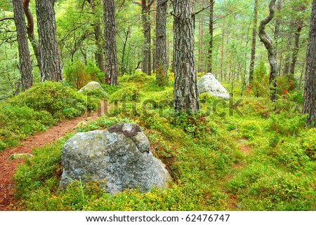 Autumn forest landscape with walkway