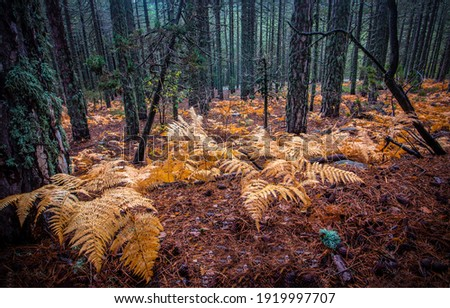 Autumn forest leaves covered ground. Forest plants in autumn. Autumn forest scene. Autumn in forest
