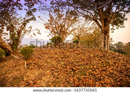 Autumn forest leaves ground. Autumn leaves falling. Autumn leaves on autumn ground