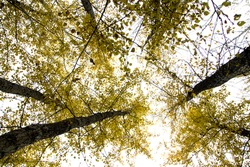 autumn forest, look at the sky