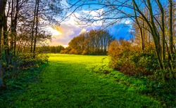 Autumn forest meadow landscape. Forest meadow grass in autumn. Autumn forest meadow. Autumn meadow grass view