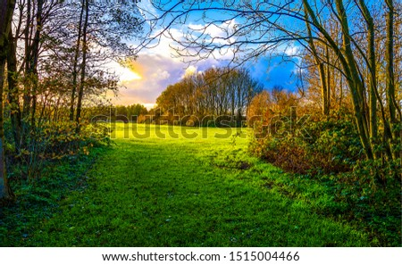 Photo of  Autumn forest meadow landscape. Forest meadow grass in autumn. Autumn forest meadow. Autumn meadow grass view