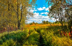 Autumn forest meadow landscape. Forest meadow view. Meadow in autumn forest. Forest meadow in autumn