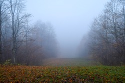 Autumn forest mist fog landscape. Forest fog in autumn forest mist scene. Autumn forest fog mist