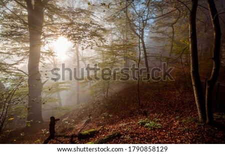 Autumn forest mist in morning. Forest mist in autumnmorning. Autumn forest mist. Forest mist in autumn