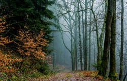Autumn forest mist path view. Mist forest path. Forest mist parh view. Path in forest mist