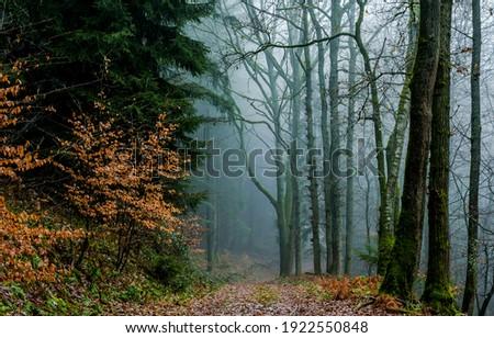 Autumn forest mist path view. Mist forest path. Forest mist parh view. Path in forest mist