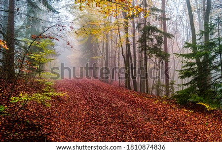 Autumn forest mist road view. Forest mist road in autumn fall. Red autumn forest mist road. Misty road in autumn forest