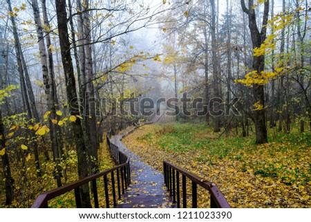 Autumn forest mist stair view. Forest stairway autumn fog. Autumn forest park stairway view. Autumn stairway forest mist