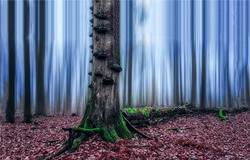 Autumn forest mist. Tree trunk in autumn forest mist. Forest mist tree trunk. Forest mist in autumn fall