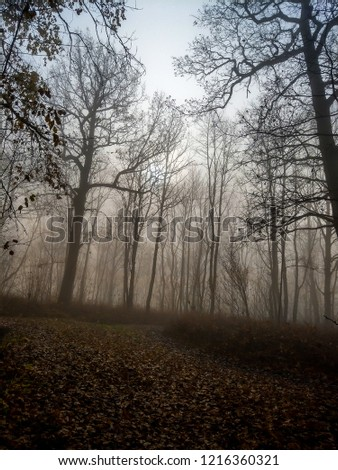 Autumn forest mist trees silhouette view. Halloween forest mist trees background. Autumn forest mist view. Forest mist trees background #1216360321