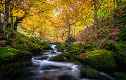 Autumn forest mossy creek flow. Autumn forest creeek. Creek in autumn forest. Autumn creek water flowing