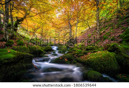 Photo of  Autumn forest mossy creek flow. Autumn forest creeek. Creek in autumn forest. Autumn creek water flowing