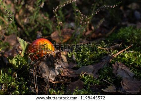 Autumn forest. Mushroom picking. Be careful. #1198445572