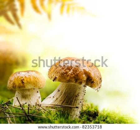 autumn forest mushrooms - stock photo