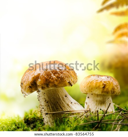 autumn forest mushrooms - stock photo