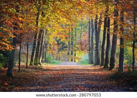 Autumn forest. Nachtegalenpark in Antwerp - Shutterstock ID 280797053