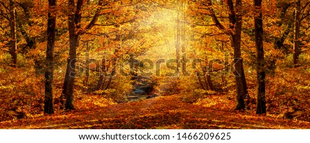 Autumn forest nature. Vivid morning in colorful forest with sun rays through branches of trees. Scenery of nature with sunlight. Wonderful natural background. Fairy tale woodland