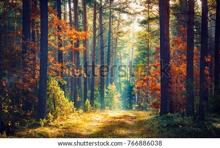 Autumn forest nature. Vivid morning in colorful forest with sun rays through branches of trees. Scenery of nature with sunlight #766886038