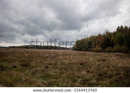 Autumn forest near Nowa Luka village Zdjęcia stock ©