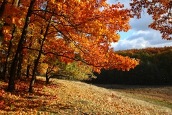 Autumn forest on a hillside. Golden autumn in the forest.