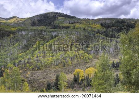 Autumn forest on mountains slopes. Colorado, USA