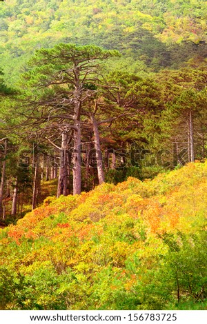 Autumn Forest on rocky Mountain hill colorful seasonal Landscape Saving Nature ecology concept