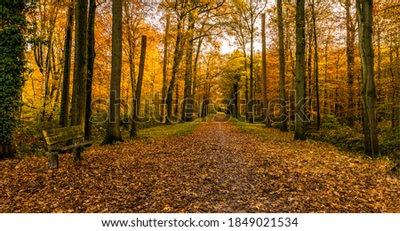 Autumn forest park alley view. Forest park bench in autumn season. Autumn forest park bench alley. Autumn fores alley