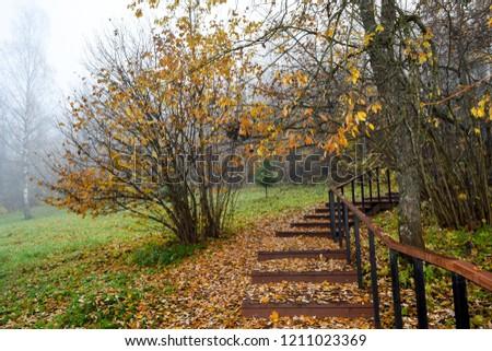 Autumn forest park stair scene. Autumn fog forest stairway. Forest stairway in autumn forest mist scene. Autumn stairway in park fog