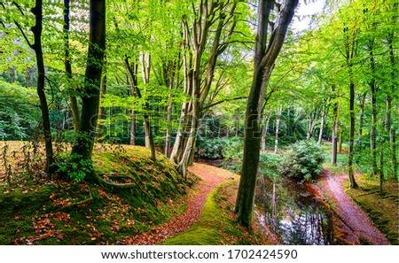Autumn forest park trail landscape. Forest in autumn season. Autumn forest scene. Autumn in forest